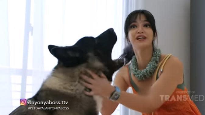 Dalam tayangan Youtube TRANS TV Official pada Minggu (20/9) lalu, Nia menceritakan, bahwa Anjing jenis Akita yang diimpor dari Thailand itu menjadi tempat mencurahkan isi hatinya ketika sedang ada masalah keluarga. (Youtube/ TRANS TV Official)