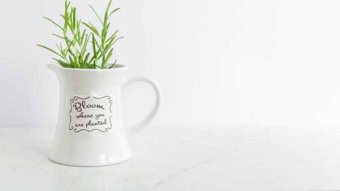 Pot tanaman (Photo by Paula Brustur on Unsplash)