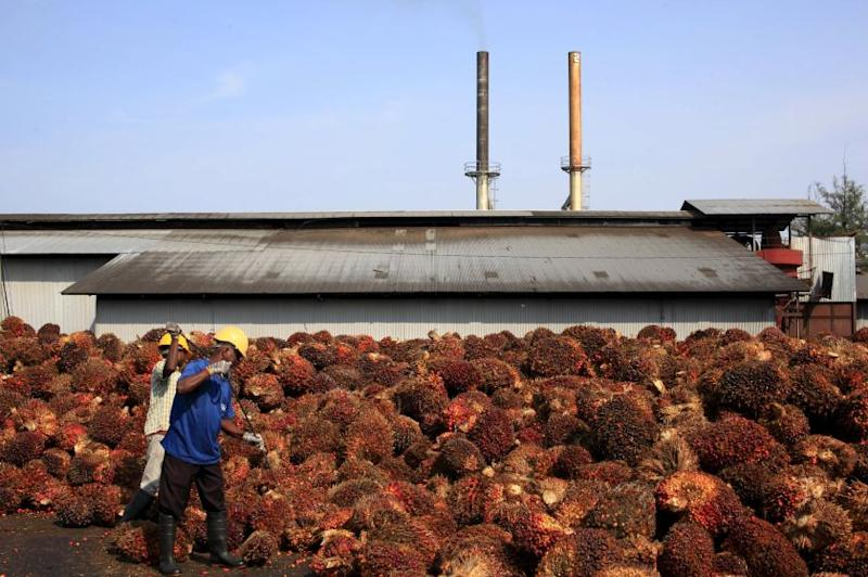 Workers collect palm oil fruits inside a palm oil factory in Sepang in this picture released September 21, 2014. — Reuters pic