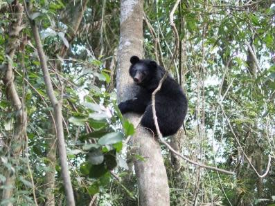 傳來好消息 南安小熊跑回森林了