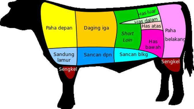 Lokasi daging (sumber: wikipedia)