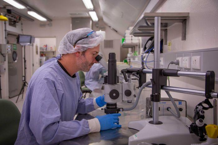 Scientist David William in a blue lab coat, blue gloves and hair net looks through a microscope in a lab.