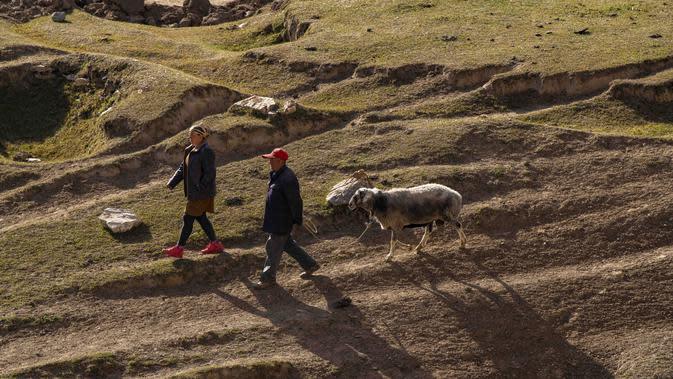Para penggembala menggiring domba mereka di padang rumput pegunungan di Wilayah Yecheng, Daerah Otonom Uighur Xinjiang, China barat laut, pada 8 Oktober 2020. (Xinhua/Hu Huhu)