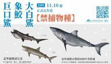 這3種鯊魚即日起禁捕 漁民捕獲未通報最高罰15萬元