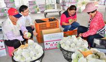 促銷台東釋迦紅烏龍茶 板橋展售廣受歡迎 (圖)