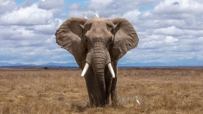 Ilustrasi gajah (Photo on Unsplash)