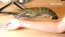 中秋烤肉 巨無霸蝦比手臂還要長