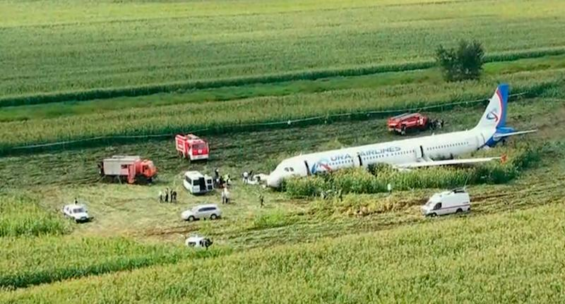 Ural Airlines plane shown in the middle of a cornfield in Moscow after birds forced it to make an emergency landing.