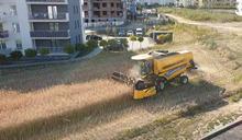 波蘭農民拒賣地「農地被公寓大樓包圍」 住戶讚賞:佩服他的堅持