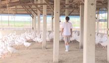 挽救不景氣! 業者推「即食鵝肉產品」搶客