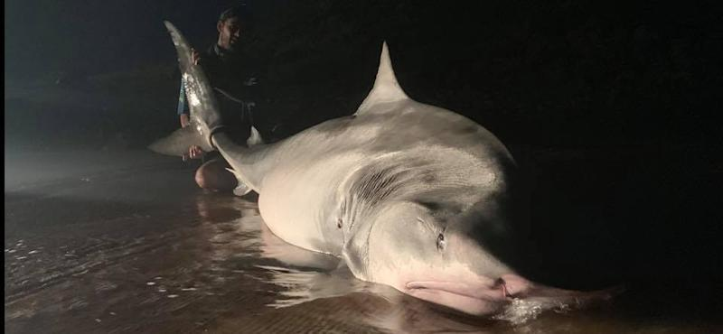 Shark on beach