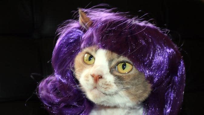 Potret Kucing saat Memakai Wig ini sukses Bikin Gemes (sumber:eonline.com)
