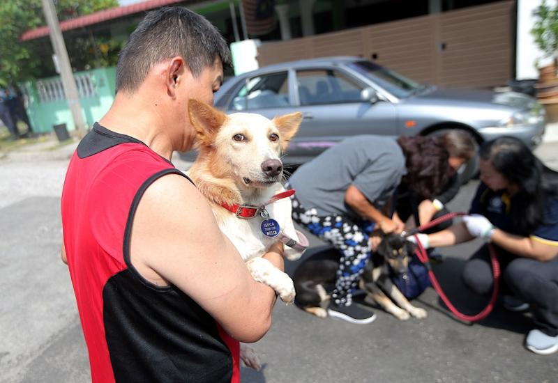 Soong said the council would give volunteers a grace period of three days to catch a stray before the council sends in its own dog catching unit. — Picture by Farhan Najib