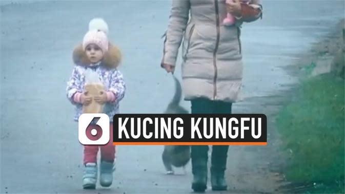 VIDEO: Bikin Gemas, Aksi Kucing 'Kungfu' di Jalan