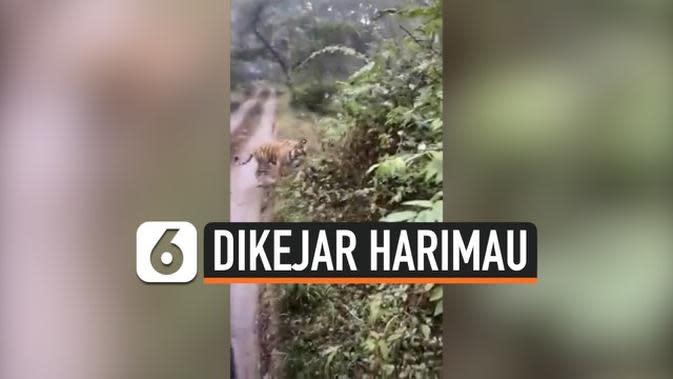 VIDEO: Kepanikan Turis Dikejar Harimau Saat Kunjungi Taman Nasional