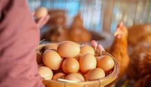 【食力】永續與天然價值讓昆蟲飼料接受度大增!英國研究:72%英國人願意買昆蟲養大的蛋