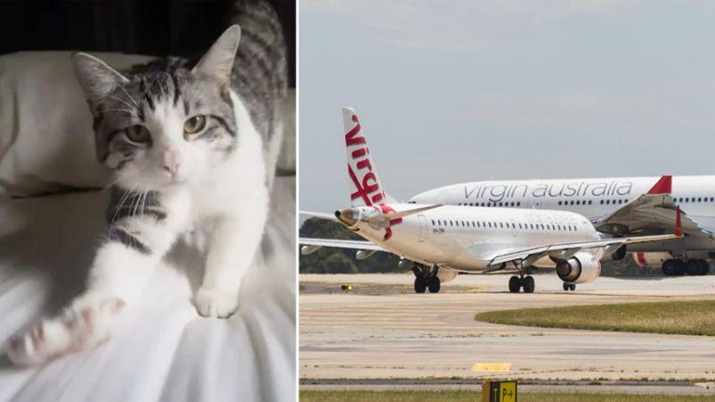 Cookie the cat looks at the camera on a bed (left). Virgin planes on the tarmac (right).