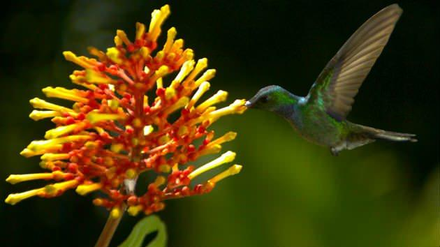 Exclusive: 'Wings of Life' Trailer Reveals Slo-Mo Awesomeness of Birds and Bugs