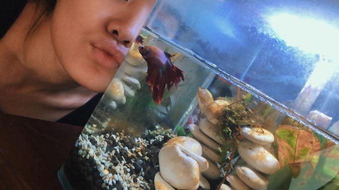 Selain Ify Alyssa, penyanyi Sheryl Sheinafia juga suka memelihara ikan cupang. Ia memiliki beberapa warna unik ikan cupangnya. Bahkan, ia pernah mengajak ikan cupangnya untuk syuting video klip berjudul Setia. (Instagram/sherylsheinafia)