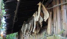 彼得洛.烏嘎工作室排列野獸骨頭 展現獵人戰績 (圖)