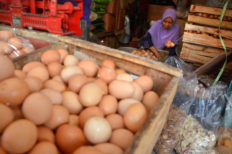 COVID-19 akibatkan harga telur ayam ras di Nunukan naik