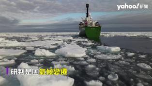 全球暖化打亂海洋潮流 8米灰鯨地中海迷路恐餓死