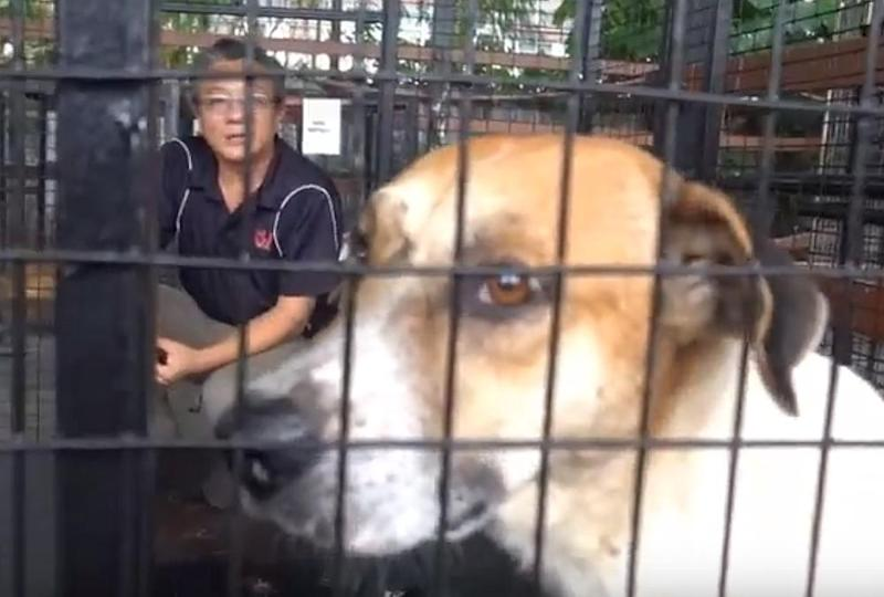 Teoh says there's no visible physical injury on the stray and that it is being treated well at the pound, with food and water being provided. — Screengrab via Youtube/SJ Echo