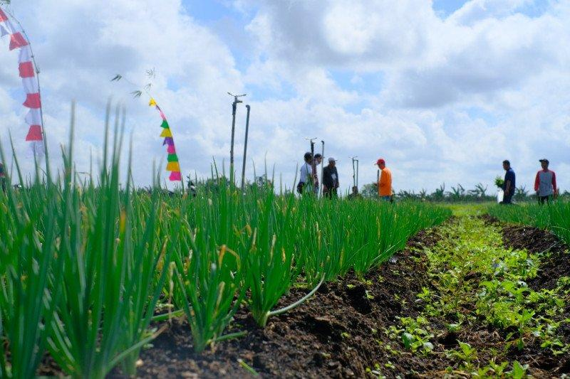 BRG dorong budidaya pertanian alami di lahan gambut