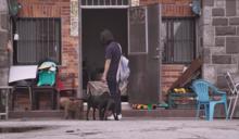 《十二夜 2》赴美取經遇台灣醫師 「落實結紮7年」浪浪數量下降