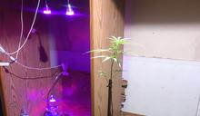 自家果園栽種大麻 高市警跨區台南查緝