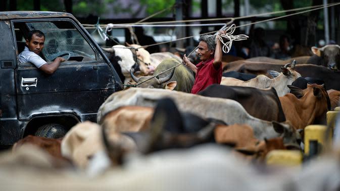 Seorang lelaki memegang sapinya di sebuah pasar yang menjual ternak sebelum perayaan Idul Fitri yang menandai akhir bulan suci Ramadan di Sibreh, provinsi Aceh (20/5/2020). (AFP/Chaideer Mahyuddin)