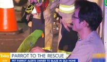 比火災預報器還靈 鸚鵡幫助主人逃災避難