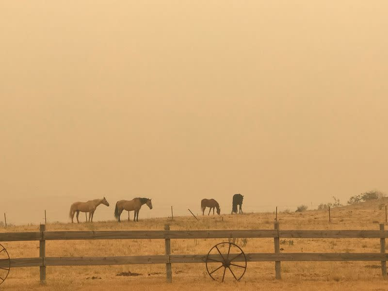 Horses graze amid haze in Jindabyne, a township affected by the Dunns Road bushfire, in New South Wales, Australia