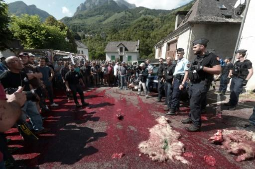 In an earlier protest against the bears, farmers in the French Pyrenees scattered the bloody remains of a sheep in front of a local town hall
