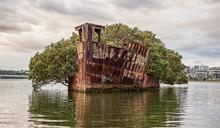 史上最美的「漂浮森林」!澳洲百年棄船成了自然孕育地