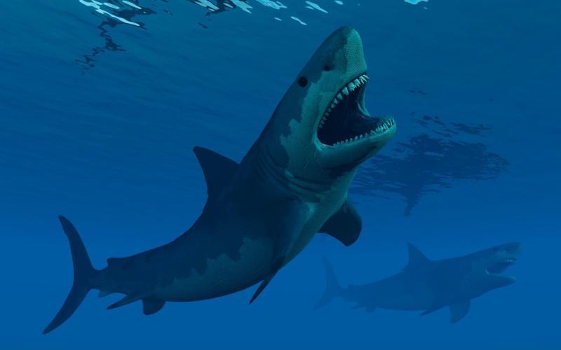 The megalodon was an apex predator - Stocktrek Images