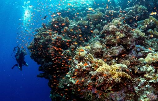 The UN warned last year that just 1.5 Celsius of global warming could see 70-90 percent of Earth's coral reefs vanish