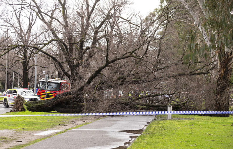 A fallen tree is seen in Parkville, Melbourne, on Monday after falling on Allison Milner and killing her.