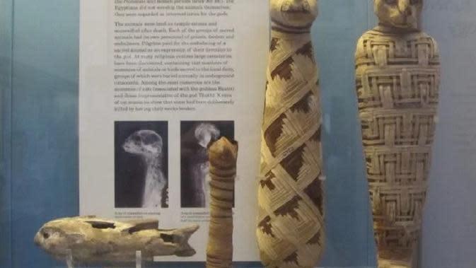 Mumi kucing di British Museum. (Creative Commons)