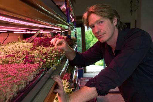 Microgreens can exude the most startling flavours -- mustard, wasabi, pepper, citrus, capers and even oysters -- and in such high concentrations that they substitute easily for their counterparts on the spice or condiment rack