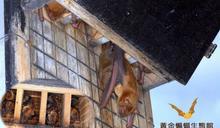 用蝙蝠屋吸引蝙蝠來幫你除蟲吧!