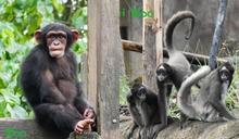 「猿」、「猴」傻傻分不清?靠4祕訣秒區分