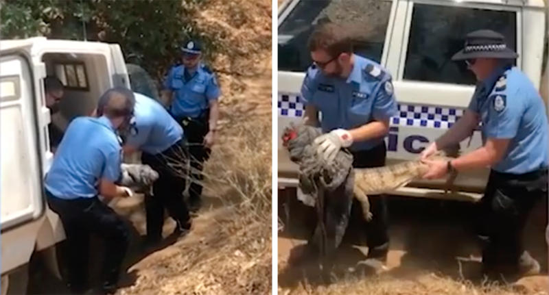 WA Police captured a freshwater crocodile in a Fitzroy Crossing industrial area.