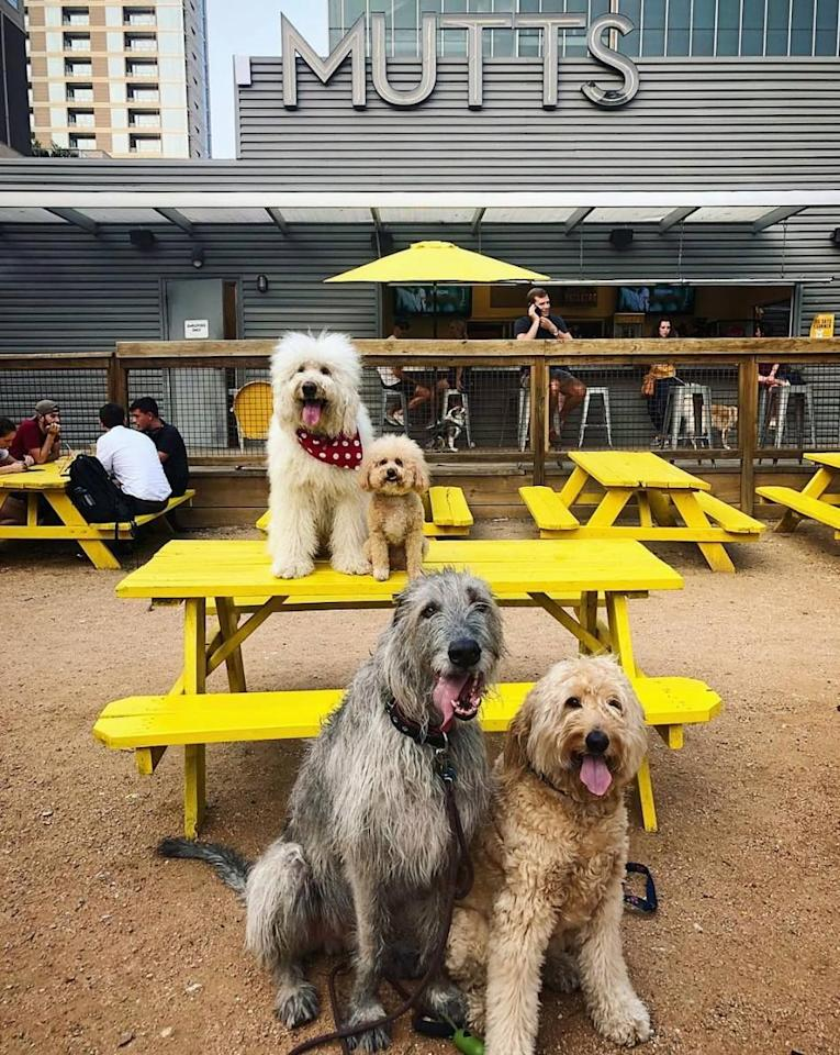 """<p><em>Fort Worth and Dallas, TX</em></p><p>Imagine a bar where you can fetch a drink <em>and </em>dogs run free. Well, that fantasy is a reality at <a href=""""https://muttscantina.com"""" target=""""_blank"""">Mutts Canine Cantina</a>. The Texas-based bar has two locations–one in Dallas, and the other in Fort Worth. </p><p>Photo: Facebook/<a href=""""https://www.facebook.com/MuttsCanineCantina/photos/a.332765716853725/1474265006037118/?type=3&theater"""" target=""""_blank"""">MuttsCanineCantina</a> </p>"""