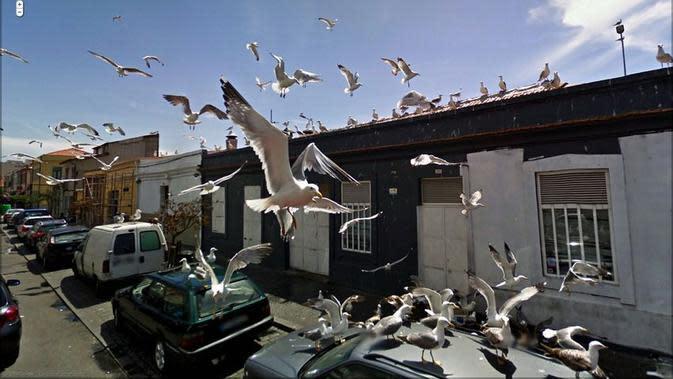 Serbuan burung camar (Jon Rafman/Google Street View)