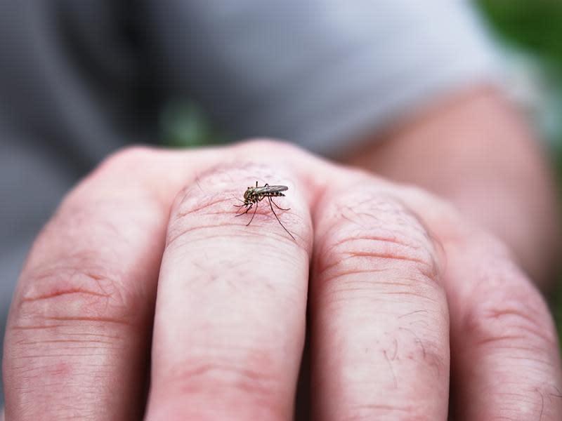 瘧蚊叮咬所引起 台列第二類傳染病