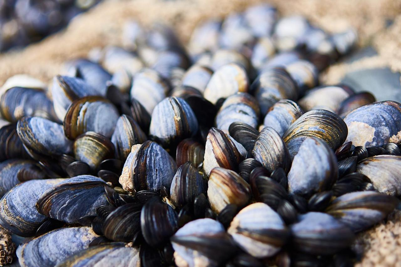 <p><strong>Paint Rock River Mussels </strong><strong>- </strong>With over 70% of its freshwater population endangered or extinct, mussels are quickly disappearing. The Mussels found on the banks of the Paint Rock River are no exception.   <strong></strong></p>