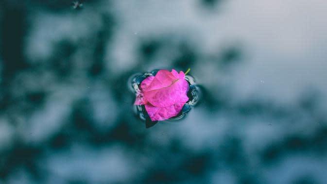Simak apa saja manfaat yang diberikan air mawar untuk kulit
