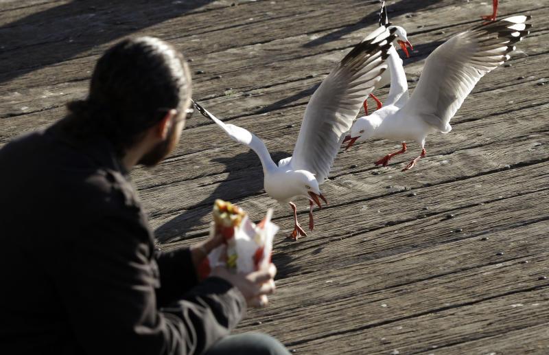 Seagulls stalk a man eating subway.