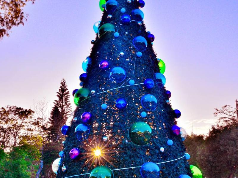 生態魔幻耶誕樹
